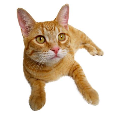 Should I Bathe my Cat